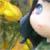 :iconejpinky-luvr005: