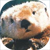 :iconelectricotter: