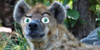:iconelemental-clan:
