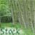 :iconelementangel-stock: