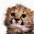:iconellie5480517: