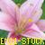 :iconen11-stock:
