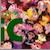 :iconepicaku6plz:
