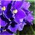 :iconesmeralda29: