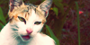 :iconeverything-cats: