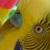 :iconevilplatypus:
