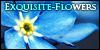 :iconexquisite-flowers: