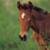 :iconfaeolan-equus: