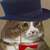 :iconfancycatplz: