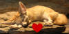 :iconfennec-fox-lovers: