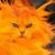 :iconfirecat88: