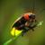 :iconfirefly2976: