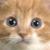 :iconfirepawthecat: