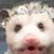 :iconfleetopossum: