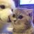 :iconfloofy-cat1: