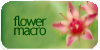:iconflower-macro: