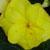 :iconflowerclub: