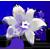 :iconflowerdrop2plz: