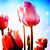 :iconflowerdrop400:
