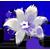 :iconflowerdropplz: