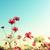 :iconfloweredforms: