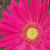:iconflowergoddess: