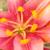 :iconflowerloveclub: