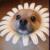 :iconflowerx:
