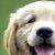 :iconfluff-pup-demon: