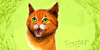 :iconfluffy-cats77: