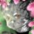 :iconfluffy-kev: