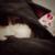 :iconfluffybunny710: