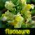 :iconfluosaure: