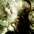 :iconforest-druid: