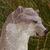 :iconformerwolfaboo: