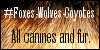 :iconfoxes-wolves-coyotes: