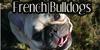 :iconfrenchbulldogs: