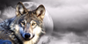 :iconftw-forthewolves:
