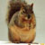 :iconfunky-squirrel: