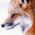 :icongamerfox: