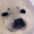 :icongameseal: