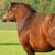 :icongeneric-horse: