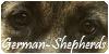 :icongerman-shepherds: