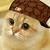 :icongforce516: