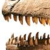 :icongiganotosauruslover: