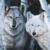 :icongirlwolf18: