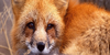 :icongood-animal-world: