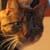:icongoodbye-kitty975: