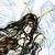 :icongothic-angel-farore: