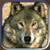 :icongrandmasterwolf: